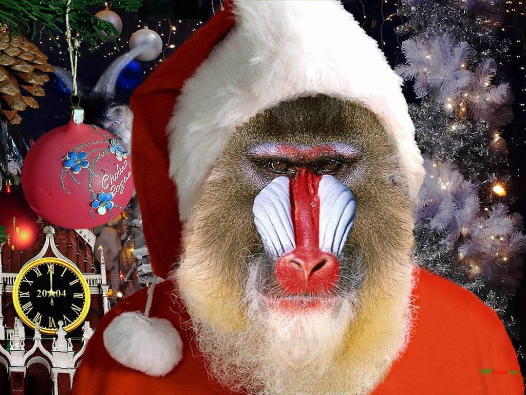 Смешные обезьяны к новому году 2017