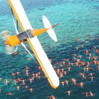 Microsoft открыла регистрацию на технический альфа-тест Flight Simulator